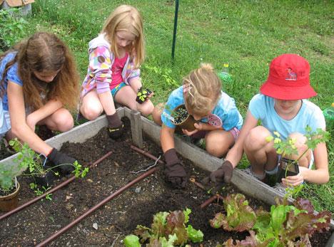 http://myimages.bravenet.com/190/474/076/6/Gardening_0.jpg