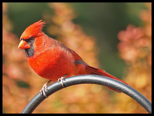 Bird Feeder Stand Bird Accessories Timba Garden Products